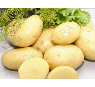 Семенной картофель Крепыш